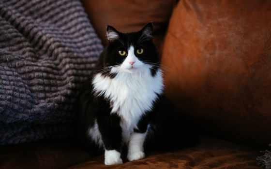 кот, клиника, умка, ветеринарный, ul, schors, express, благодарность, spas, нашего