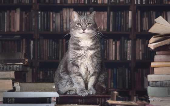 кот, библиотека, книга,