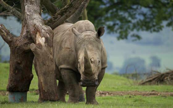 fond, лес, ultra, alive, природа, tropical, rhinocero, растение, палуба