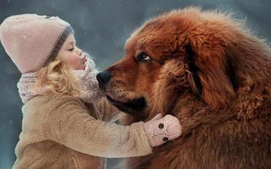 тибетский, mastiff, собака, ребенок, порода, love, который, друг