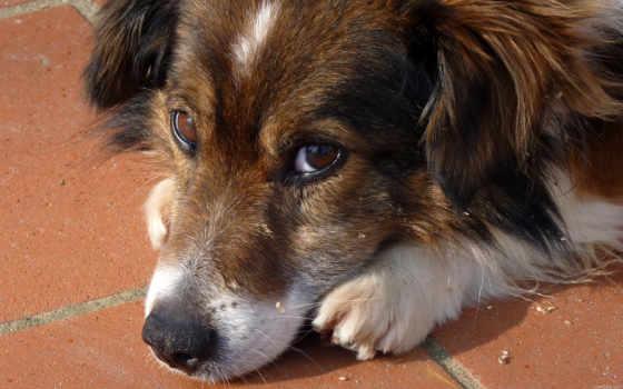 морда, собака, прислал, рейтинг, дата, кб, просмотров, грусть, окно, pair,
