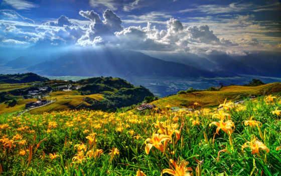 planet, цветочная, наша, you, pick, lily,