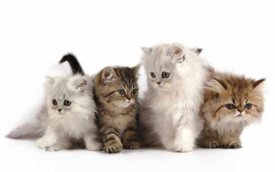 кот, кошек, babenko