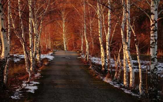 дорога, лес, весна, небо, trees, природа, desktop,
