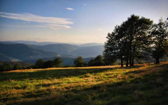 trees, лес, трава, природа, rays, которой,
