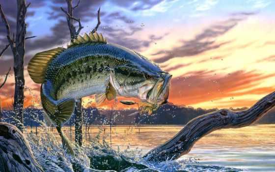 рыбалка, zhivotnye,