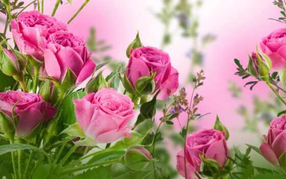 день, татьянин, postcard, поздравление, dnee, ученица, роза, tatyana