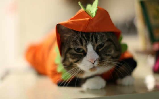 кот, кошки Фон № 6302 разрешение 1680x1050