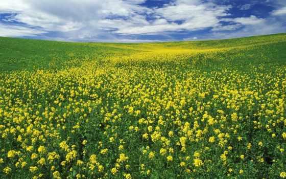 поле, цветы Фон № 7937 разрешение 1600x1200