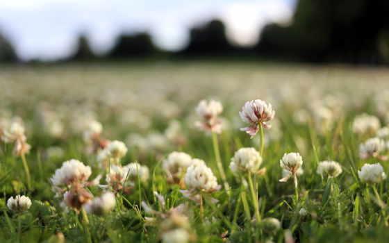 Цветы 20079