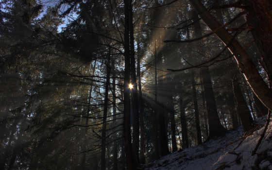лес, природа Фон № 31834 разрешение 1920x1080