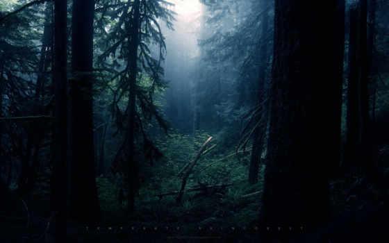 природа, дерево, качестве