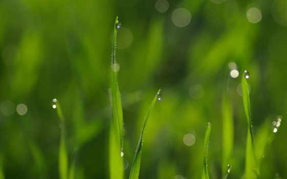 wet, трава, ago