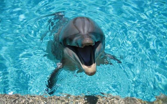 дельфин, water, дельфины, улыбка, солнечный, shine, свет,