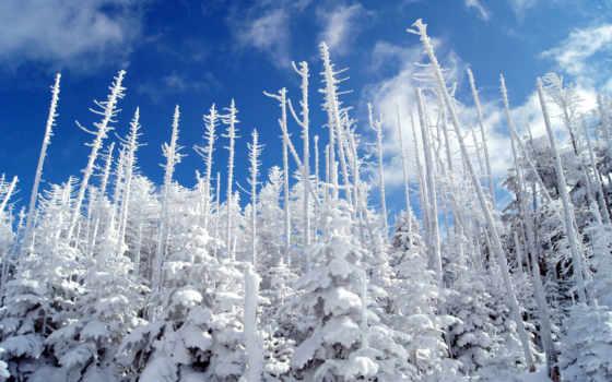 rboles, hoja, perenne, fondos, winter, pantalla, para, лес, naturaleza, снег, дек,