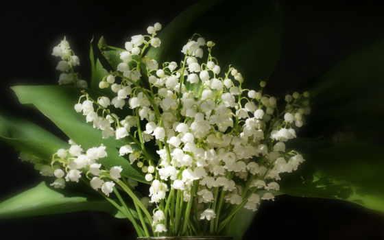 ландыши, букет, цветы, качества, высокого, ландышей,