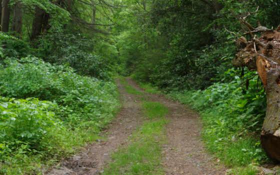 trail,