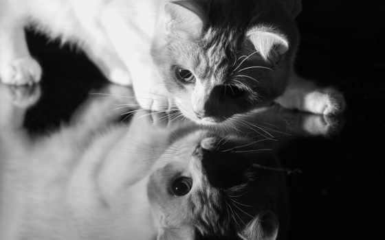 glass, кот, красивая, кошки, морда, shadow, отражение, чб, зеркале,