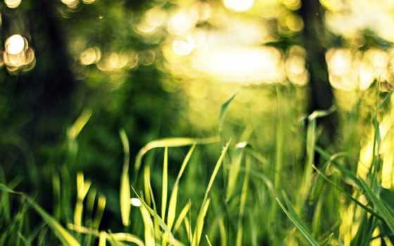 pictures, свет, природа