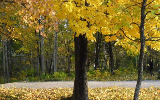 jesienne, drzewa, park, liście, jesień,