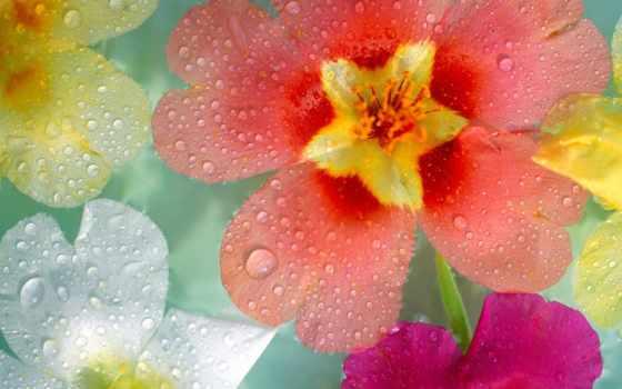 капли, cvety, разные