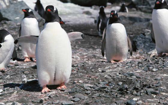 котики, пингвины, заставки
