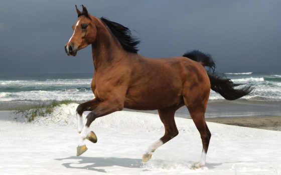 horses, лошадь, самый