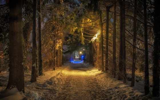 лес, ночь, winter, природа, туннель, свет, дорога, forests,