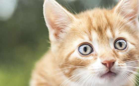 red, котенок, размытом