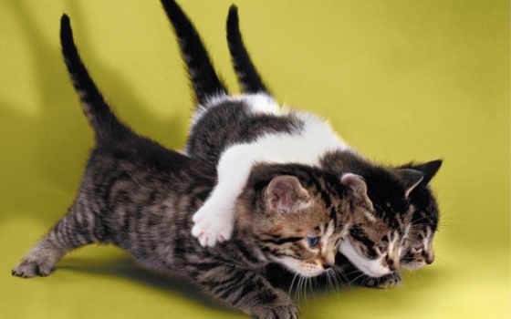 мотиваторы, everything, кошки, мотиватор, дружбу, дружба, порядке, тебя, фотографий,