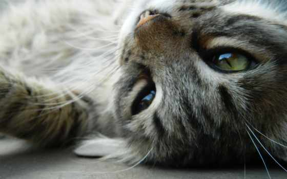 лежачий кот