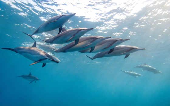 дельфины, водой, дельфин
