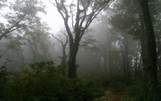 лес, mysticism, деревья, туман, dark,