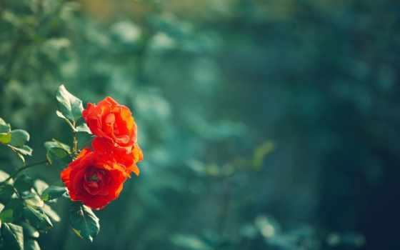 cvety, фон, сетка, fullscreen, арматурная, листочки, полноэкранные, цветочки,