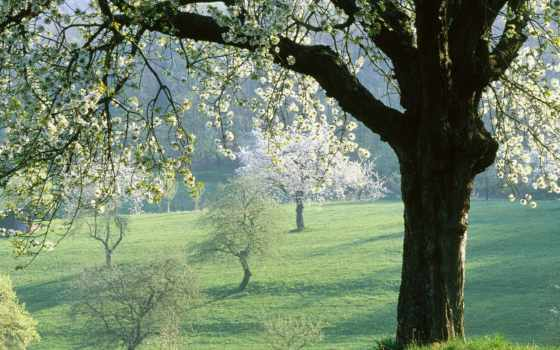 весна, красивый, смотреть