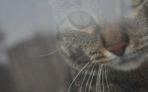 кошки, кот, избранные