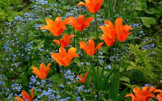 цветы, клумба, flora, качестве,