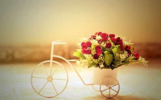 martha, cvety, супер, сексуальный, поздравления, girls, bike, день, розы,