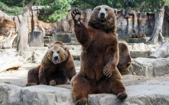 медведь, медведи, bears, лапа, мужики, чуваки, dudes, волна, похмелье, теме, друзья,
