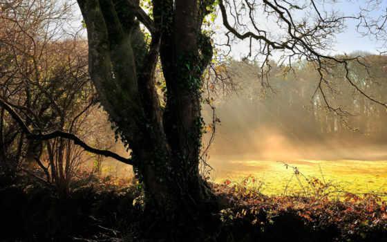 рассвет, солнца, листва, ivy, дерево, browse, небо, rays, страница, epica,