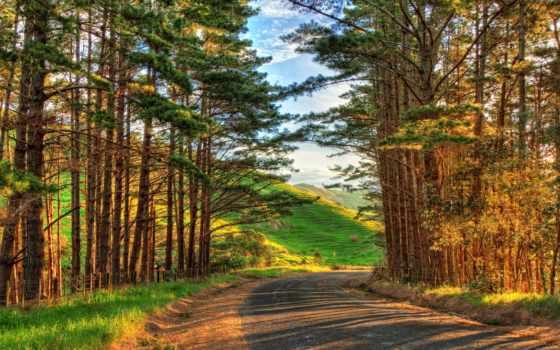 осень, дорога, поворот, trees, природа, новая, zealand, красивые, горы,