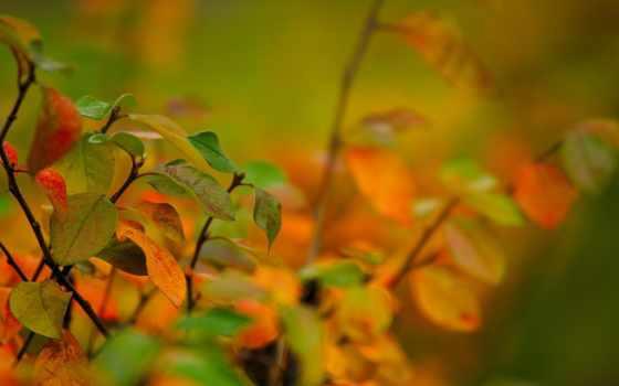 макро, thought, день, gandhi, осень, можно, quotes,