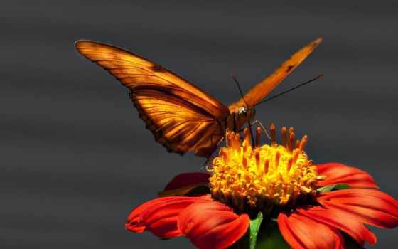 красивые, случайные, cvety, красивый, качества, хорошего, крылья, макро, million, бабочка, полет,