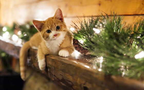 кот, red, коты, white, красивый, branch, free, взгляд, kartinika