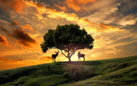 закат, hill, дерево, небо, лань, облако, закладка, птица, поле, one