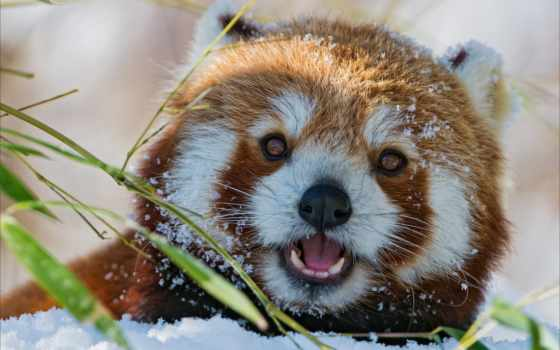 sur, 副标题, panda