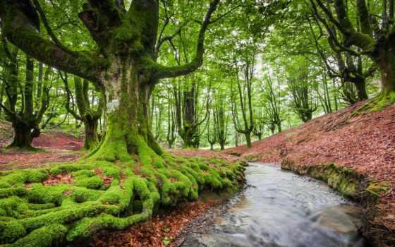 деревя, лес, красивые