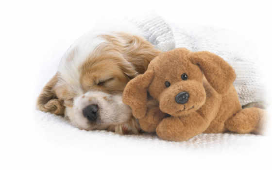 zhivotnye, спящие, животных