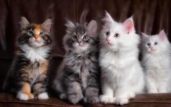собаки, кошки, кошек, собак, породы, следы, приколы, кот, собака, знамя, officially,