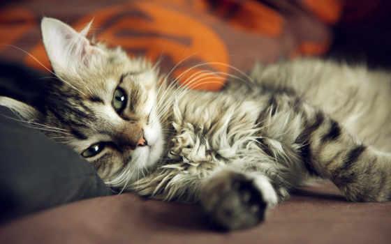 люблю, кошки, думаю, кошек, котята, милые, сумасшедшие, тебе, meme, тебя,
